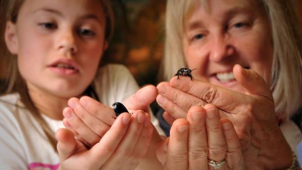 Meg Loman shows student bugs