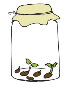 Image of sprouting legumes
