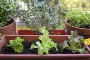 Cover photo for Container Gardening Is for Everyone
