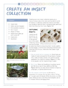 Image of the handout: creating an insect collection