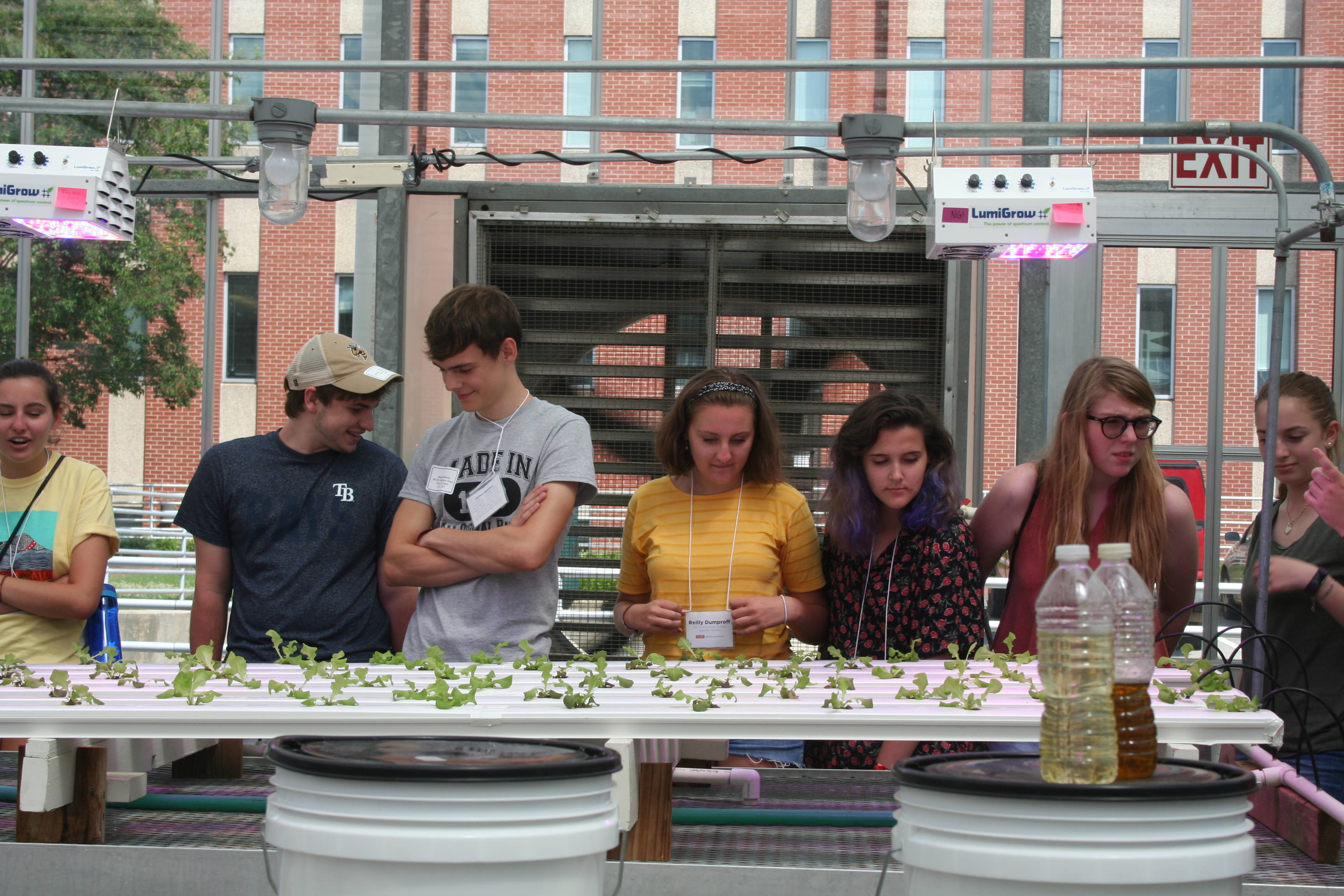 Photo of HSSI youth looking at hydroponic system in the NC State Fox Greenhouses