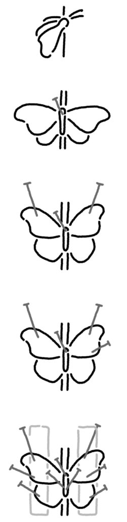 Diagrams to spread butterfly and moth wings