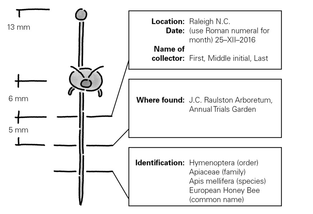 Example of insect labels