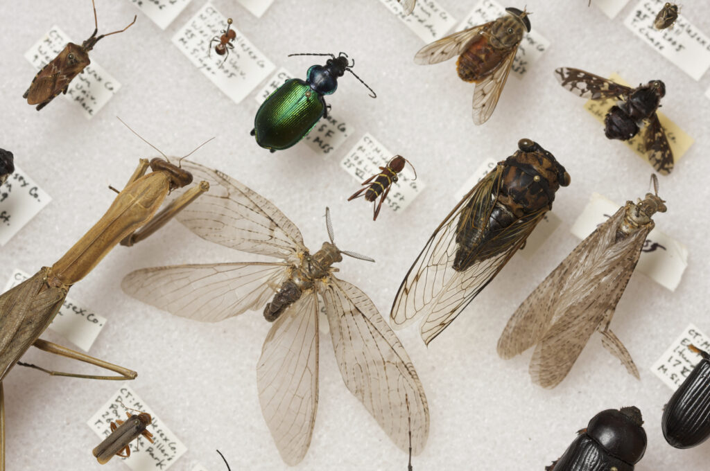 Image of pinned insects