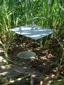 image of a pitfall trap